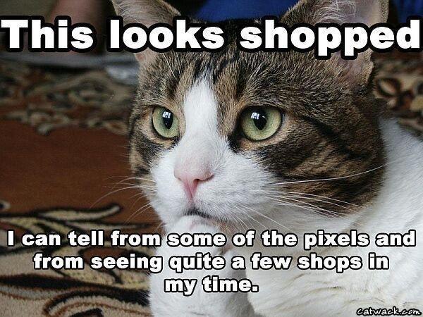 Shop_Cat.jpg