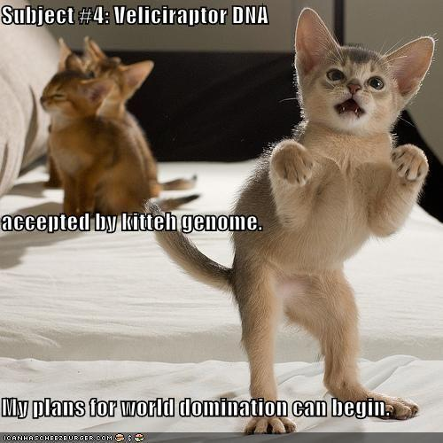 dominationkittehha7.jpg