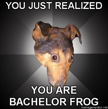 You_are_Bachelor_Frog.png