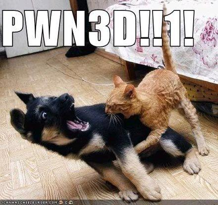pwned-chien-chat.jpg