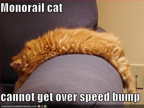 funny-pictures-monorail-cat-orange-couch-speedbump.jpg