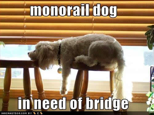 funny-dog-pictures-monorail-dog.jpg