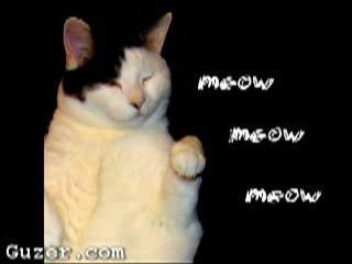 kitty_cat_dance20110724-22047-1d01wm.jpg