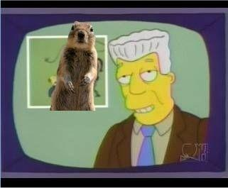 i-for-one-welcome-our-new-squirrel-overlords-28180-1250315294-116.jpg