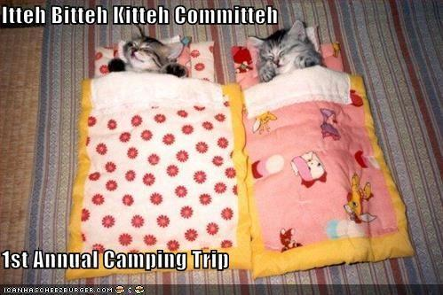 funny-pictures-itty-bitty-kitty-committee-goes-on-a-camping-trip.jpg