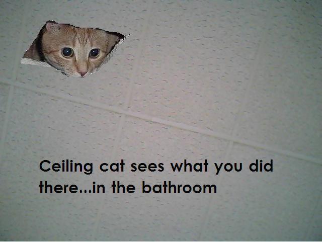Ceilingcat.jpg