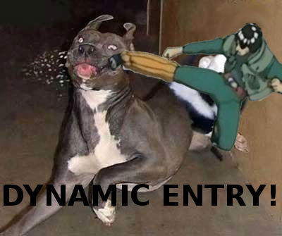 Gai_dog_dynamic_entry.jpg