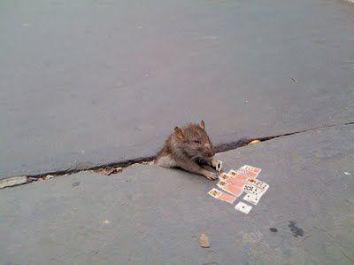 sad_rat_sidewalk_02.jpg