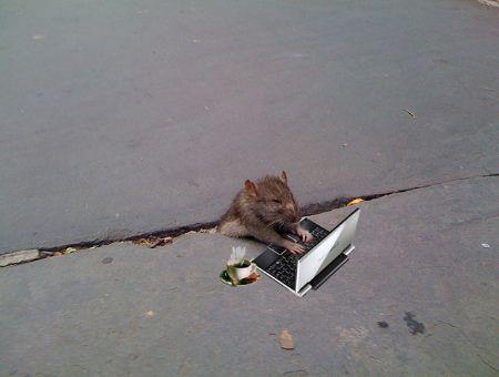 mousecomputer.jpg