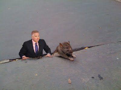 sad_rat_sidewalk_15.jpg