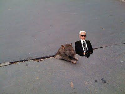 sad_rat_sidewalk_24.jpg
