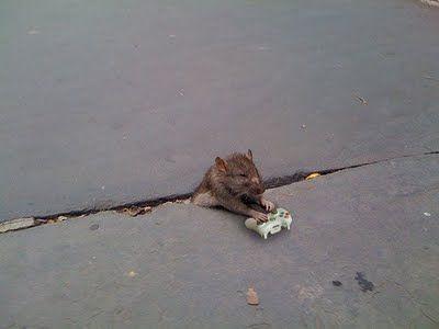 sad_rat_sidewalk_2520110724-22047-sr7iml.jpg