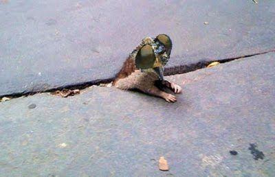 sad_rat_sidewalk_30.jpg