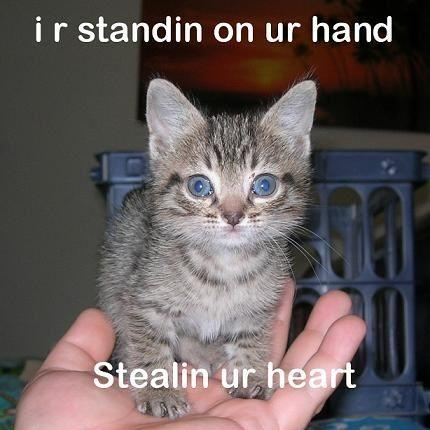 caption_lolcats_I-R-on-ur-hand.jpg
