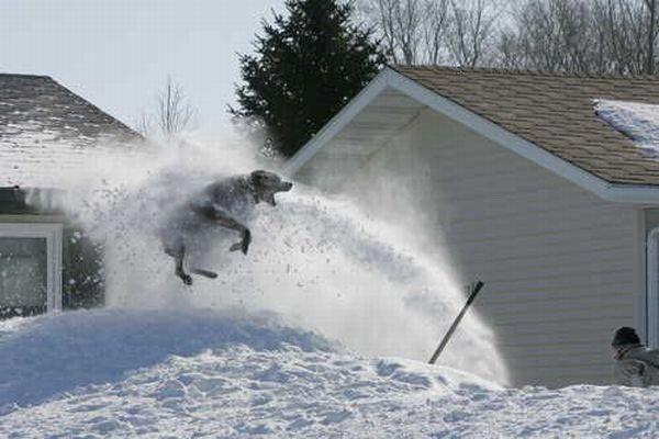 snow_blowerwharrgarbl.jpg