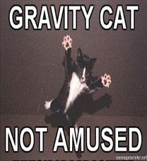 208x228_Gravity-Cat-GRAVITY-CAT-NOT-AMUSED.jpg