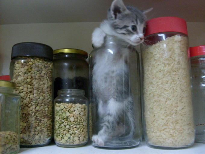 Bonsai_kitten_kitchen_version_by_yuuzafka.jpg