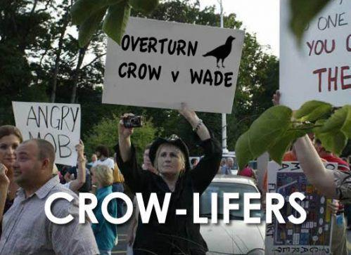 crowlife1.jpg