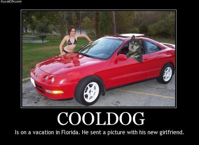 cool_dog2.jpg