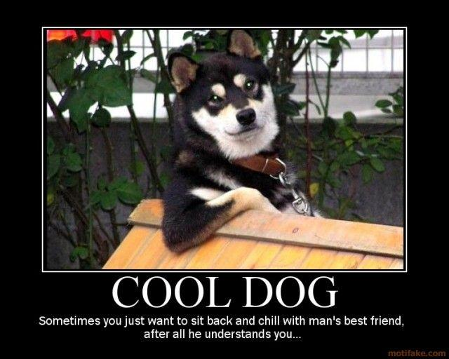 cool-dog-dogs-demotivational-poster-1255287794.jpg
