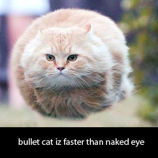 bulletcat0192.jpg