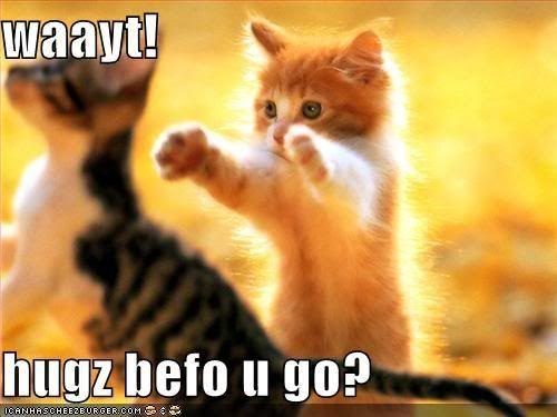 funny-pictures-kittens-hugs-before-.jpg