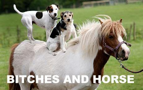 bitches_and_horse_2.jpg