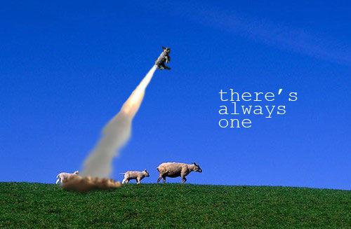 sheep_always1.jpg