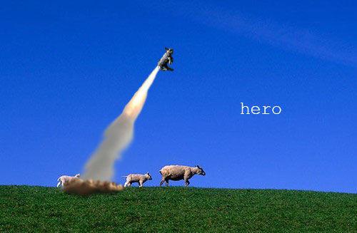 sheep_hero.jpg