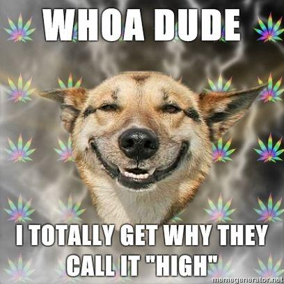 Stoner-Dog-WHOA-DUDE-i-totally-get-why-they-call-it-High.jpg