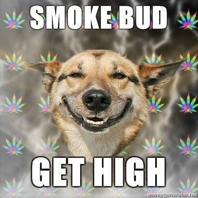 Stoner-Dog-Smoke-Bud-GET-HIGH.jpg