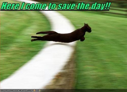 funny-pictures-cat-comes-to-save-day.jpg