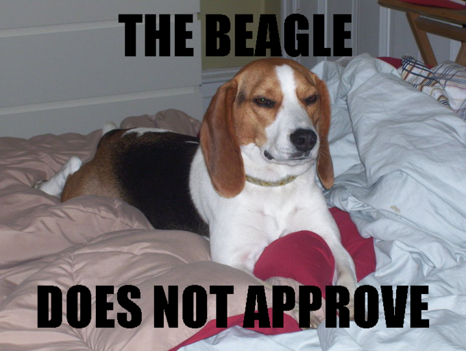 the-beagle-does-not-approve.png