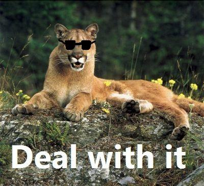 1275535701040 image 52619] cougar cougar out of f***ing nowhere! know your,Cougar Memes