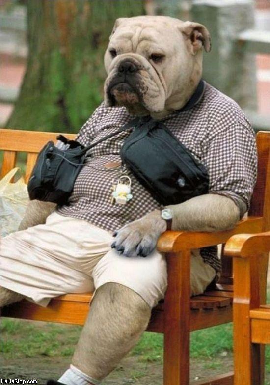 The_Dogman.jpg