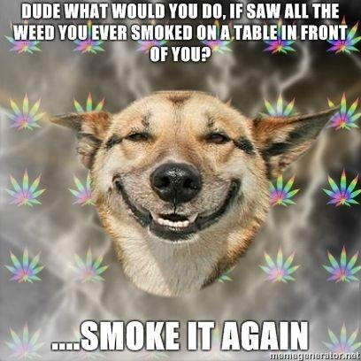 Stoner Dog dude what would you do If saw all the weed you ever smoked on a table in front of you Smoke it again image 55224] stoner dog know your meme