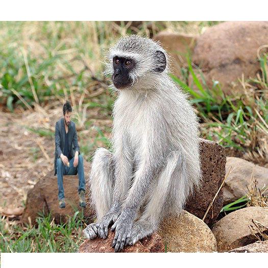 sad_monkey.jpg
