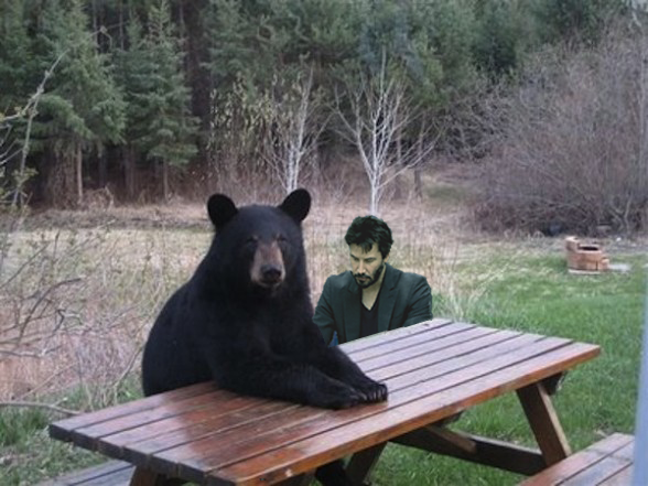 bear_picnic_table1_588x441_20_Moments_In_Animal_Awesomeness_copy.png