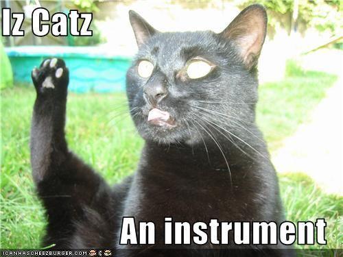 Iz Catz an instrument