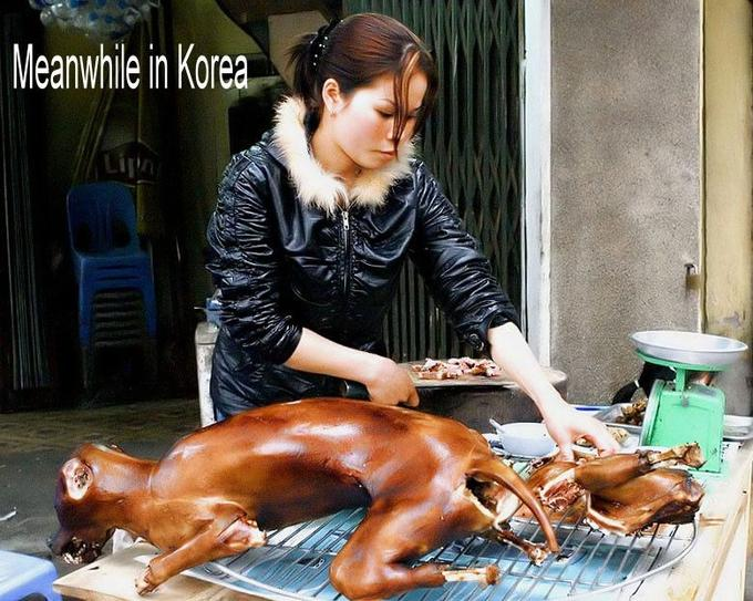 korea-dog-meat.jpg
