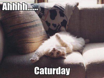 ahhhh-caturday.jpg