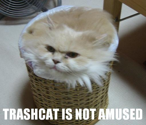 trashcat.jpg