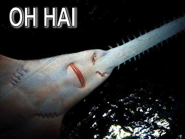 sawshark-teeth.jpg