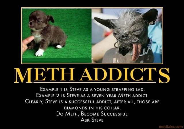 meth-addicts-dog-meth-addict-demotivational-poster-1257988391.jpg