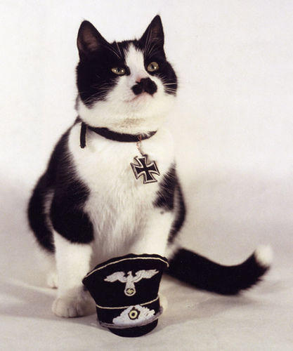 kitler_Cats_that_look_like_Hitler-s417x500-42886-580.jpg