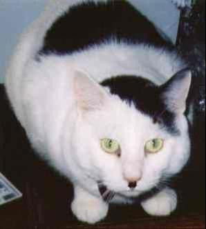 kitler1_Cats_that_look_like_Hitler-s298x332-42887-58020110725-22047-1q0y2qv.jpg