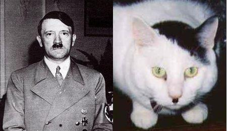 http://i0.kym-cdn.com/photos/images/newsfeed/000/064/292/20060619_cats_that_look_like_hitler.jpg