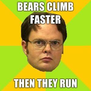 Bears-Climb-Faster-then-they-run.jpg