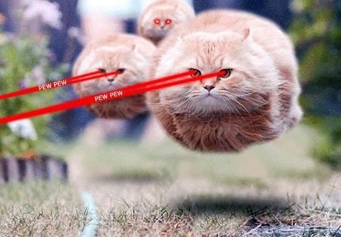Кот с глазами лазерами