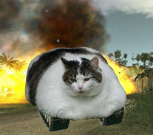 cat_tank.jpg